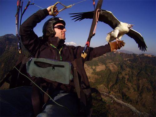 Parahawking in Nepal. Photo: parahawking.com