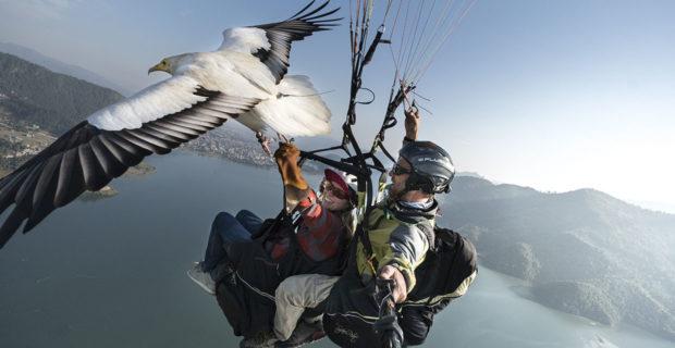 Parahawking. Photo: Cody Tuttle